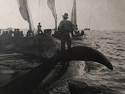 Straccatura - Anno 1908