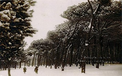 Pineta innevata - Anno 1929