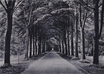 viale dei Tigli - Anno 1949