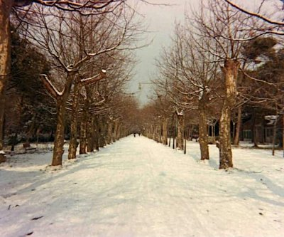 Viale Capponi - Anno 1985